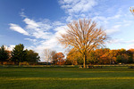 An American Elm stands in a deserted picnic area