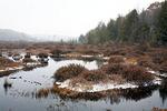 The Black Moshannon Bog