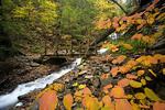 Footbridge along an autumn stream
