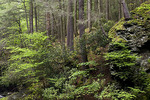 Hemlock Ravine Forest