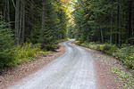 State Forest Road