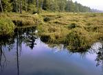 Bear Meadows