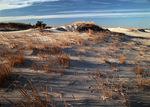 Beach Sand Dunes