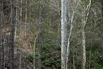 Eastern Spring Forest