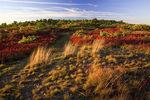 Moosic Mountain Heath Barrens