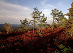 Pitch Pine/Scrub Oak/Heath Forest