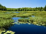 Eutrophic Pond