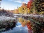 Morning Frost along Kleinhans Creek