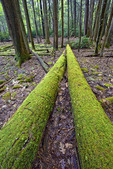 Fallen Moss Covered Logs