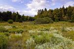 Fahneystock Run Wetland