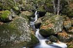 Autumn Streamlet
