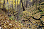 Forest in Harrison Hills Park Along the Rachel Carson Trail