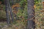 Forest in Crouse Run Ravine Along the Rachel Carson Trail