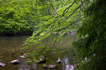 East Branch Clarion River