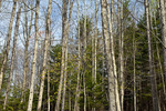 Spring Deciduous; Forest