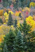 Autumn Foliage at Lac Wapizagonke
