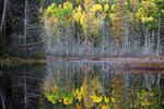 Boreal Pond