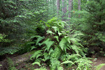 Algerina Swamp State Forest Natural Area