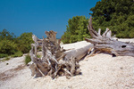 Great Lakes Driftwood