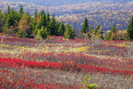 Heath Barrens at Dolly Sods