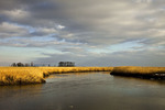 Winter Salt Marsh