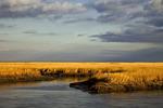 Winter Salt Marsh