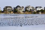 Wintering Waterfowl
