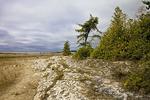 Alvar Landscape