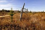 Freeland Trail Wetland
