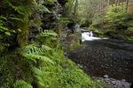 Waterfalls along the Upper Raymondskill Creek