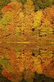 Pool K Wetland in Autumn