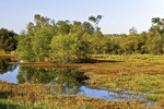 Wetland Pool in Autumn