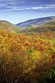 White Mountain State Forest Wild Area