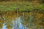 Fresh Water Wetland