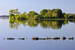 Ring-billed Gulls on Pymatuming Lake