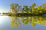 Black Willows at Pymatuming Lake
