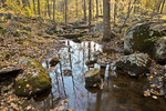 Autumn Streamlet