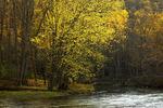 Autumn Along Penns Creek