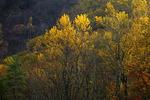 Forest Along Penns Creek