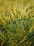 Wind Sculptured Grass