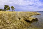Tidal Marsh along Chester River