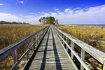 Tundra Swan Boardwalk