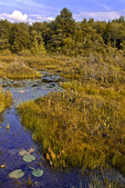 Tobyhanna Lake Bog
