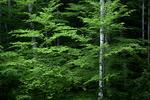 Summer Deciduous; Forest