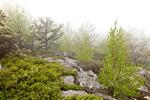Pitch Pine Scrub Oak Heath Barren