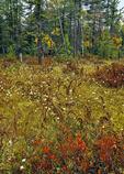 A non-glacial sphagnum bog