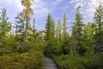Tannersville Boreal Bog