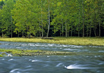 First Fork Sinnemahoming Creek