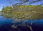 Pinchot Lake