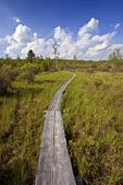 Trail at Thomas Darling Preserve at Two-Mile Run